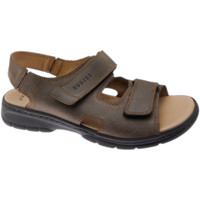Chaussures Homme Sandales et Nu-pieds Robert RO03310ma marrone