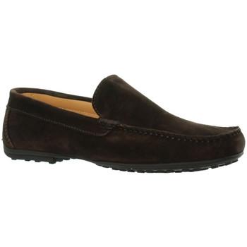 Chaussures Homme Mocassins Baxton Mocassins  ref_bom46204 Marron Marron
