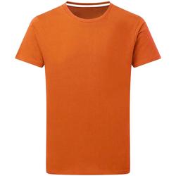 Vêtements Homme T-shirts manches courtes Sg Perfect Orange