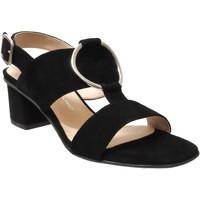 Chaussures Femme Sandales et Nu-pieds Brenda Zaro F3586 Noir velours