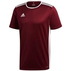Vêtements Homme T-shirts manches courtes adidas Originals Entrada 18 Bordeaux