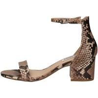 Chaussures Femme Sandales et Nu-pieds Steve Madden IRENEE PYTHON.