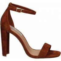 Chaussures Femme Sandales et Nu-pieds Steve Madden FRANKY SUEDE chestnut