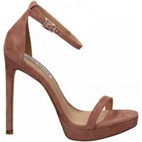 Chaussures Femme Sandales et Nu-pieds Steve Madden MILANO SUEDE mauve
