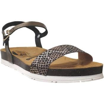 Chaussures Femme Sandales et Nu-pieds Plakton Garden Bronze metallisé