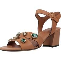 Chaussures Femme Sandales et Nu-pieds Bruno Premi BZ3601X Marron