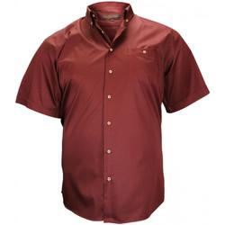 Vêtements Homme Chemises manches courtes Doublissimo chemisette en popeline dundee bordeaux Bordeaux