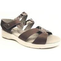 Chaussures Femme Sandales et Nu-pieds Arcopedico VENEZIA PIEL GRIS Sandalias