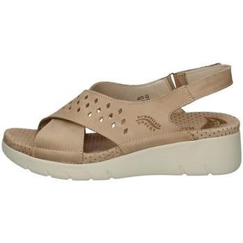 Chaussures Femme Tongs Florance 41622-1 TORTORA