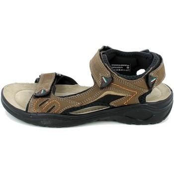 Chaussures Homme Sandales et Nu-pieds Grisport 81501.02_38 Marron