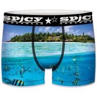 Sous-vêtements Garçon Boxers Spicy Underwear ASS1 bleu