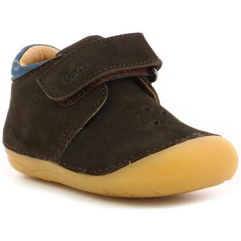 Chaussures Garçon Boots Aster Kimousi MARRON FONCE