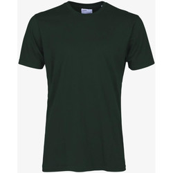 Vêtements Homme T-shirts manches courtes Colorful Standard CLASSIC ORGANIC TEE hunter-green-verde