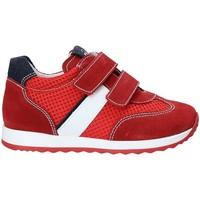 Chaussures Enfant Baskets basses NeroGiardini P923451M Rouge
