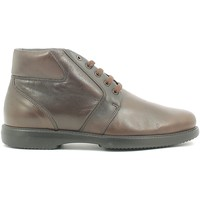 Chaussures Homme Boots Fontana 5678 V Marron