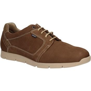 Chaussures Homme Derbies Baerchi 5080 Marron