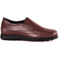 Chaussures Homme Mocassins Soldini 20366 P Marron