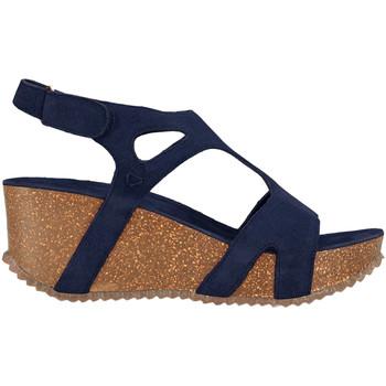Chaussures Femme Sandales et Nu-pieds Docksteps DSE106243 Bleu