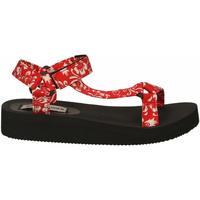 Chaussures Femme Sandales et Nu-pieds Steve Madden HENLEY PRINT red
