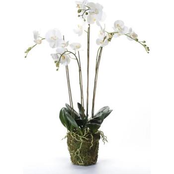 Maison & Déco Plantes artificielles Emerald Plante artificielle Blanc