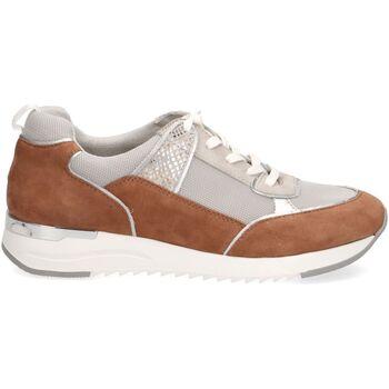 Chaussures Femme Baskets basses Caprice Sneaker Marron