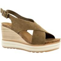 Chaussures Femme Sandales et Nu-pieds Plakton platon kaki vert