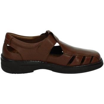 Chaussures Homme Sandales et Nu-pieds Primocx  Marron