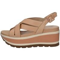 Chaussures Femme Sandales et Nu-pieds Elvio Zanon EN4203 NU