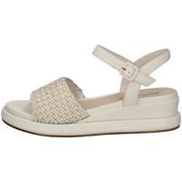 Chaussures Femme Sandales et Nu-pieds Elvio Zanon EN3401 CRÈME