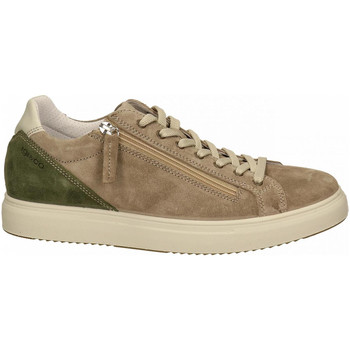 Chaussures Homme Baskets basses IgI&CO USH 71281 tortora