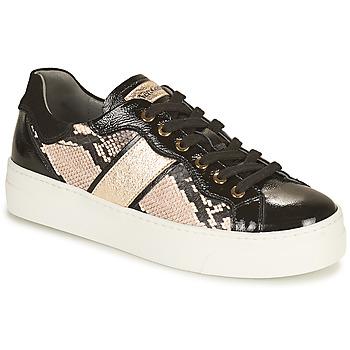 Chaussures Femme Baskets basses NeroGiardini  Noir / Doré