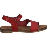 Chaussures Femme Sandales et Nu-pieds Cosmos Comfort Sandales Rot