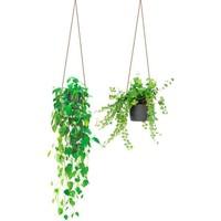 Maison & Déco Plantes artificielles Zen Et Ethnique Autocollant Mural Suspensions Plantes Vert