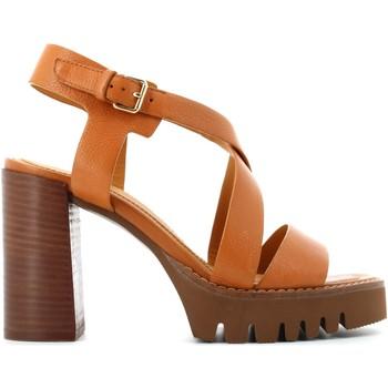 Chaussures Femme Sandales et Nu-pieds Elvio Zanon EN0902X Senape