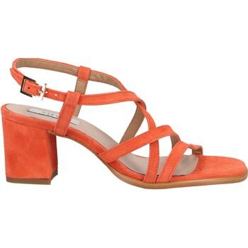 Chaussures Femme Sandales et Nu-pieds Steven New York Sandales Coral