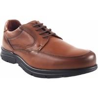 Chaussures Homme Derbies Baerchi chaussures en cuir  1250 Marron