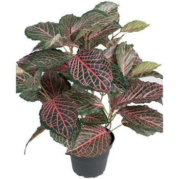 Maison & Déco Plantes artificielles Artificielles Fitonnia artificiel en pot, H 40 cm, D 40 cm Vert-rose