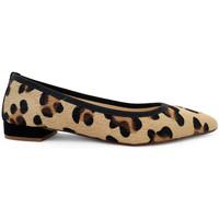 Chaussures Femme Ballerines / babies Ballerette C MARZIO026-004-011 Marrons