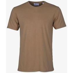 Vêtements T-shirts manches courtes Colorful Standard T-shirt  Sahara Camel marron