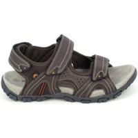 Chaussures Homme Sandales et Nu-pieds Elementerre Akka Marron Marron
