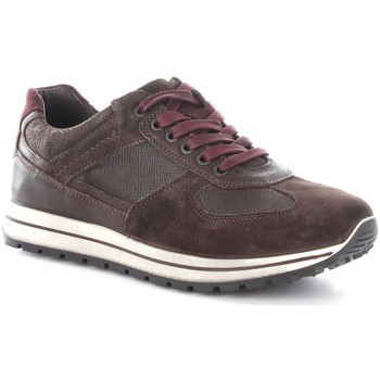 Chaussures Homme Baskets basses Igi&co 6725200 Basket Homme Coffee/T.Moro Coffee/T.Moro
