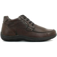 Chaussures Homme Boots Enval 6904 Chaussures lacets Man Brun Brun