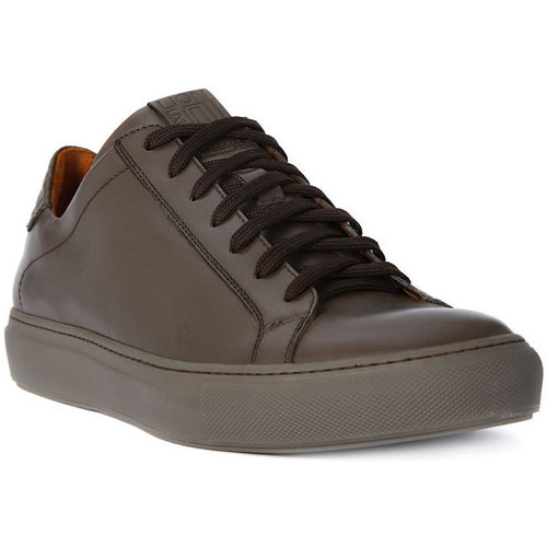Chaussures Homme Baskets basses Lion WEST 311 Marrone