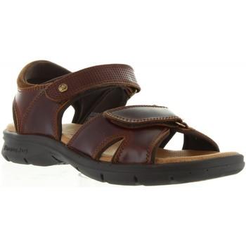 Chaussures Homme Sandales et Nu-pieds Panama Jack SANDERS CLAY C1 Marrón
