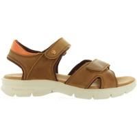 Chaussures Homme Sandales et Nu-pieds Panama Jack SANDERS MINK C1 Marrón