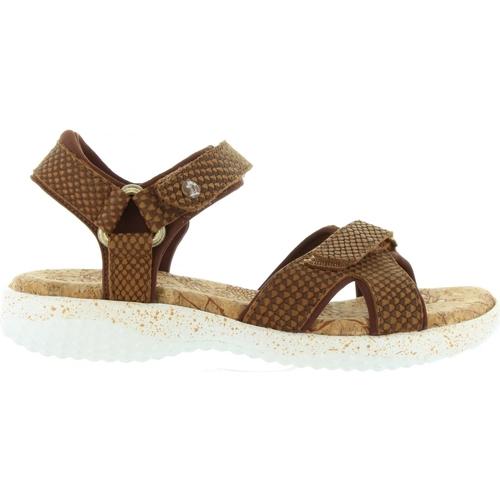 Chaussures Femme Sandales et Nu-pieds Panama Jack NOJA SNAKE B3 Marrón