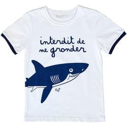 Vêtements Garçon T-shirts manches courtes Interdit De Me Gronder Le Requin Bleu