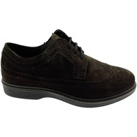 Chaussures Homme Derbies Loren LOG0292ma marrone
