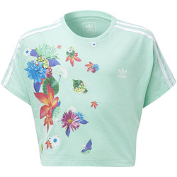 Vêtements Fille T-shirts manches courtes adidas Originals T-shirt GRPHC Cropped green