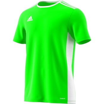 Vêtements Homme T-shirts manches courtes adidas Originals Entrada 18 Vert